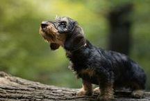 <<doggy>>