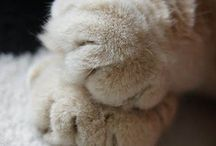 ☆ paws - pootjes ♥