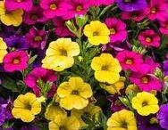 Virágok erkélyre (félárnyékot kedvelők)
