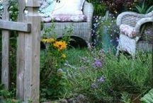 happy in my Garden / by Sue Brannlund