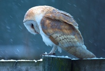 beaks & feathers / by Sue Brannlund