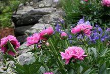 Voor in de tuin / Alles om de tuin op te leuken!