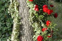 Yard and garden ideas / How to make my yard beautiful and easy / by Marlene Farrens