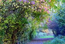 Peaceful Gardens / by Ruby Malebranche