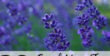 Herbs, plants & aromatherapy