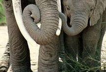 Zöld elefánt / A Zöld Elefánt kihívást Jocó bácsi indította el, hogy ellenpontja legyen a Kék Bálnának. Brutális feladatok és öngyilkosság helyett arra készteti a fiatalokat, hogy legyenek kedvesek magukkal és persze másokkal, örüljenek az élet apró szépségeinek, és legyenek boldogok.  Ezen a táblán összeszedtem minden elefántos dolgot, ami segítséget jelenthet a feladatok végrehajtásában, pl. hogyan rajzoljunk elefántot.