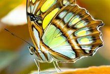 Metamorphosis. The beauty behind Change!