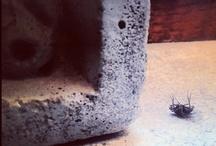 Animal/Closeups  / please visit instacanv.as/liberto_ #nature #closeups #instagram