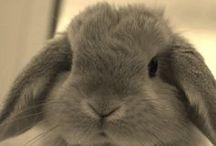 bonnie and rabits rabits rabits / conejos conejos y mas conejos
