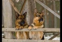 awesome animals :-)