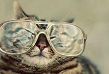 Everybody wears eyeglasses