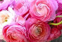 Flowers beautiful photo / Beautiful floral photo