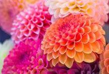 Flowers / by Stitch & Yarn