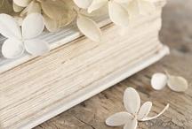 Guusje    Hydrangea / Hortencia