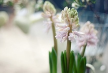 Guusje    Spring