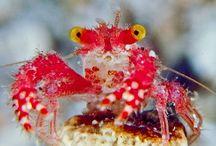 Beneath the deep blue sea / Extraordinary sea creatures / by Carol London