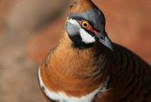 Animal :  Bird