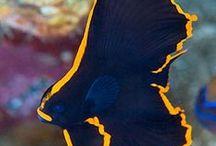 Animal : Fish