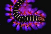 Animal : Ocean creature