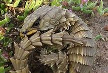 Animal : Lizard