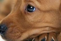 Animal :  Dog