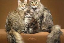 Animal : Cat