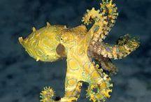 Animal : Octopus