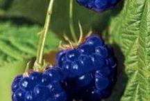 Plant : Fruit & Vegetable
