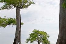 Plant : Tree