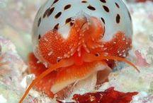 Animal : Snail & Shell