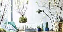House Plants / House plants for every home, bringing outside in.