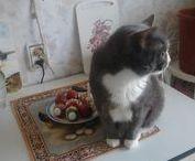 Gifs CAT / Гифки КОТЫ