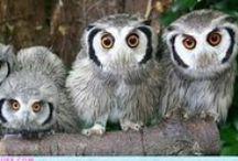 Owls / by Alma F Blanco
