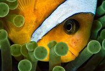 Sea animals / by Alma F Blanco