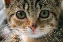 Pets - Troeteldiere ♡♡♡♡