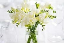 Spring Flowers / After the long cold winter - spring flowers offer bright and cheerful colors and delicate shapes.