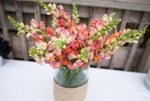 Summer Flowers / Warm temperatures offer the widest choice of flowers.