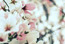 so spring