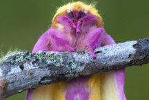 Z Animal colours Purple