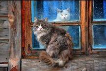 Koty/Cats/Кошки/Gatos