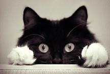 Kitties Big & Small / by Sabrina Silva