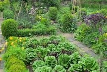 Garden - for food / Love to grow my own organic food!