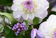 Plants - pink/purple