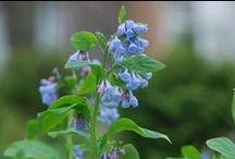 Plants - blue