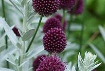 Plants - black/aubergine/plum