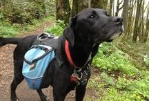 Outdoor Adventure Dogs / Dogs in the great outdoors
