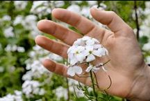 Aromatherapy Resources & News / Want to learn more about using essential oils? We're collecting favorite resources, online and in print, to help you learn about the history and latest news/research on aromatherapy.
