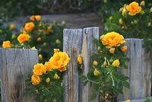 Сад Цветуёчки