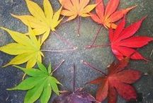 Autumn for the Home