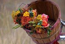Ambiance automnale / L'automne et ses couleurs